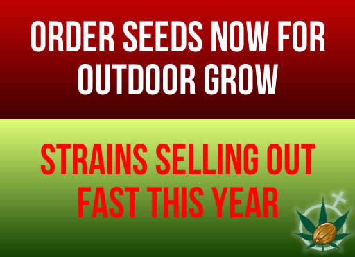 Order Seeds Now For Outdoor Grow